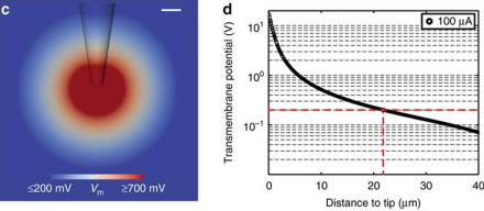 Nanoengineered electroporation microelectrodes